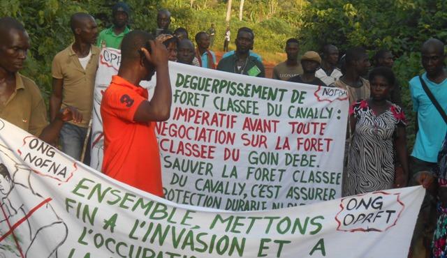 """Résultat de recherche d'images pour """"Côte d'Ivoire, forêt classée de Goin-Débé"""""""